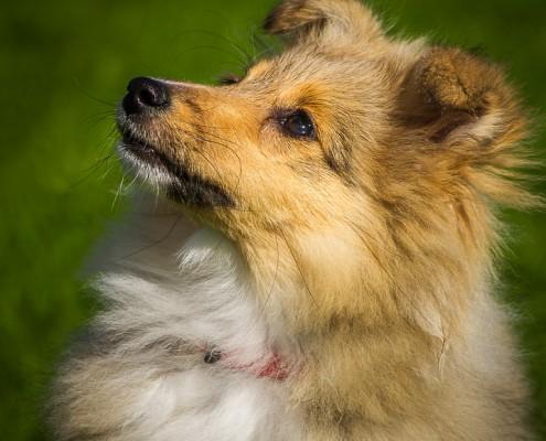 Portfolio huisdierfotografie honden