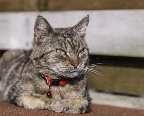 Portfolio huisdierfotografie katten