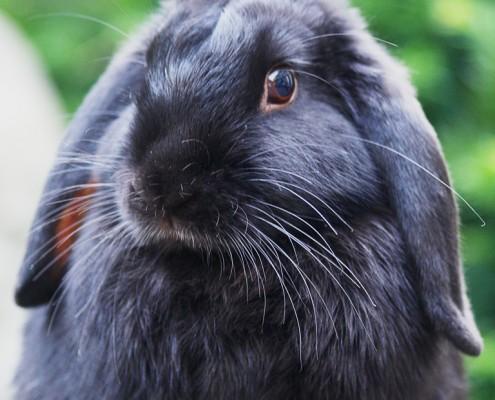 Portfolio huisdierfotografie konijnen
