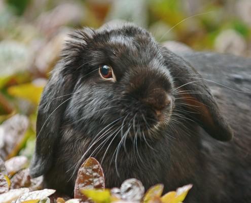 rfotografie-nederland=konijn